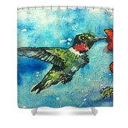 Hummingbird Sips Shower Curtain