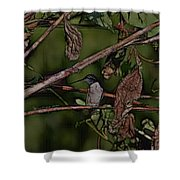 Hummingbird Waiting For Dinner Shower Curtain