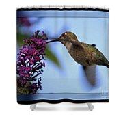 Hummingbird With Blue Border - Digital Painting Shower Curtain