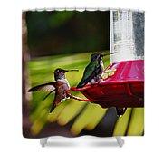 Hummingbirds At The Feeder Shower Curtain