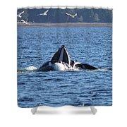 Hump Back Whale In Alaska Shower Curtain