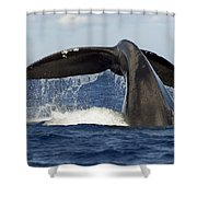 Humpback Tail Shower Curtain by Dave Fleetham