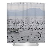 Humpback Whale Diving Amid Seabirds Shower Curtain
