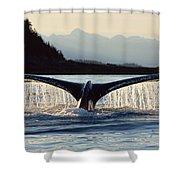 Humpback Whale Megaptera Novaeangliae Shower Curtain