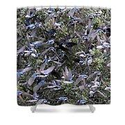 Hundreds - Tree Swallows Shower Curtain
