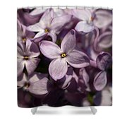 Hungarian Lilac Nr 9 Shower Curtain