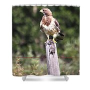 Hungry Hawk Shower Curtain