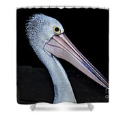 Hungry Pelican Shower Curtain