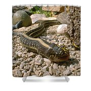 Hunter And Hunted Shower Curtain