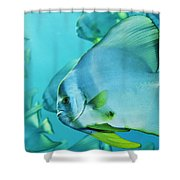 Hunting For Plankton, A School Shower Curtain