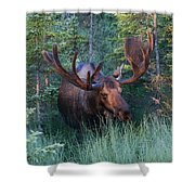 Hunting Some Munchies Shower Curtain