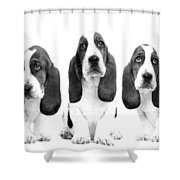 Hush Puppies Shower Curtain