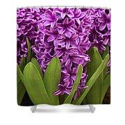 Hyacinth Hyacinthus Sp Miss Saigon Shower Curtain