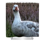 Hybrid Goose Shower Curtain