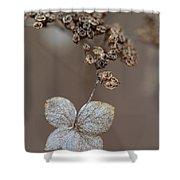 Hydrangea Arborescens Dry Flower Head In Winter Shower Curtain