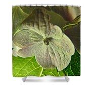 Hydrangea Macro Shower Curtain