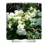 Hydrangeas And A Rose Shower Curtain