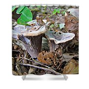 Hygrophorus Caprinus Mushrooms Shower Curtain