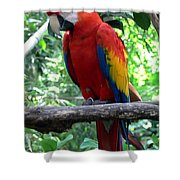 I Am Ready For My Closeup II Shower Curtain