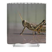 I Am Sexy And I Know It Shower Curtain