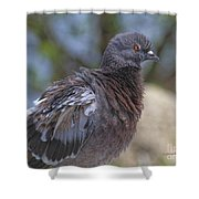 I Have The Look Shower Curtain
