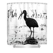Ibis Pintail Drive Cameron Prairie Nwr Shower Curtain
