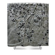Ice- Coated Hawthorn Branch Shower Curtain