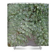 Ice-coated Norway Spruce Shower Curtain
