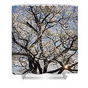 Ice Covered Tree At Sunrise Shower Curtain
