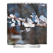 Ice On A Branch Shower Curtain