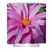 Ice Pink Dahlia Shower Curtain