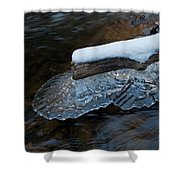 Ice Scallops Shower Curtain