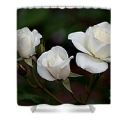 Iceberg Roses Shower Curtain