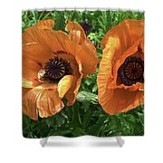 Iceland Poppies Shower Curtain