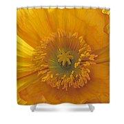 Iceland Poppy 4 Shower Curtain