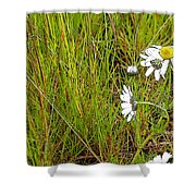 Iceland Spring Shower Curtain