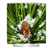 Icy Pine 1 Shower Curtain