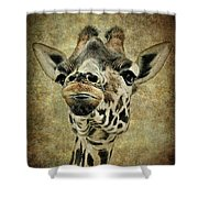 If You've Got It...flaunt It Shower Curtain