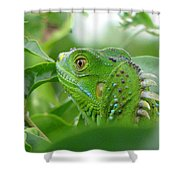 Iggy Shower Curtain