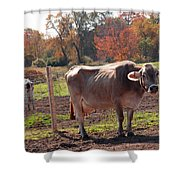 Ignoring Cows Shower Curtain