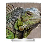 Iguana Profile Shower Curtain
