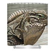 Iguana Two Shower Curtain