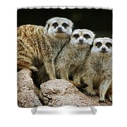 I'll Stand By You Shower Curtain