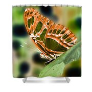 Illuminated Butterfly Shower Curtain