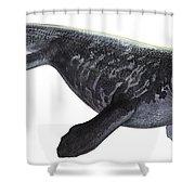 Illustration Of A Prognathodon Shower Curtain