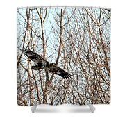Immature Bald Eagle Flying Shower Curtain