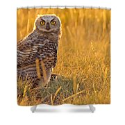 Immature Great Horned Owl Backlit Shower Curtain