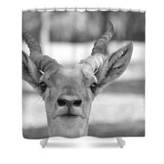 Impala -black And White Shower Curtain