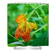 Impatiens Capensis - Orange Spotted Jewelweed Shower Curtain