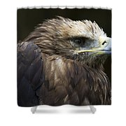 Imperial Eagle 4 Shower Curtain